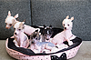 Photo 300 DPI: chinese crested puppy dogs