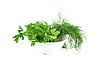 Dill and parsley | Stock Foto