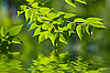 Green leaves in the water | Stock Foto