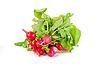 Photo 300 DPI: Fresh radishes