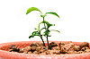 Sprout in small flower pot | Stock Foto