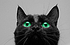 ID 3029461   Black cat look up   High resolution stock photo   CLIPARTO
