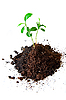 ID 3029776 | Sprout in soil | High resolution stock photo | CLIPARTO