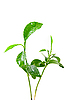ID 3029779 | Young green plant of orange tree  | High resolution stock photo | CLIPARTO