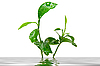 ID 3029780 | Young green plant | High resolution stock photo | CLIPARTO
