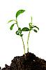 Plant in soil   Stock Foto