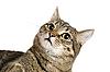 ID 3030095   Cat portrait    High resolution stock photo   CLIPARTO