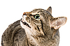 ID 3030097 | Angry cat  | High resolution stock photo | CLIPARTO