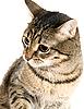 ID 3030099 | Retrato de gato | Foto de alta resolución | CLIPARTO