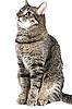 ID 3030106 | Gato gris | Foto de alta resolución | CLIPARTO