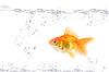 ID 3030363 | 황금 물고기 | 높은 해상도 사진 | CLIPARTO