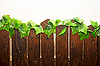 Wooden fence | Stock Foto