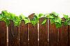 ID 3030384 | Drewniany płot | Foto stockowe wysokiej rozdzielczości | KLIPARTO