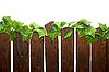 ID 3030385 | Rural fence | Foto stockowe wysokiej rozdzielczości | KLIPARTO