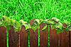 Wooden brown picket fence | Stock Foto
