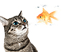 Photo 300 DPI: Cat and fish
