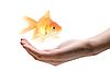 ID 3030549 | Dbać o ryby | Foto stockowe wysokiej rozdzielczości | KLIPARTO