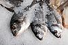冷冻鱼多拉多 | 免版税照片