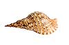 ID 3030757 | Морская ракушка | Фото большого размера | CLIPARTO