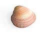 Photo 300 DPI: sea shell