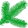 Vector clipart: Firtree branch