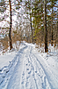 Road in the winter forest | Stock Foto