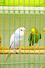Photo 300 DPI: parrots