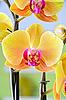 Orquídea amarilla | Foto de stock