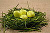 Grass nest with eggs | Stock Foto