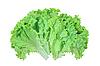 Fresh lettuce   Stock Foto