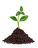 Young plant in ground | Stock Foto