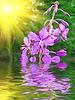 Kwiat bzu | Stock Foto