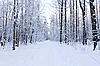 Panorama of path in winter forest | Stock Foto
