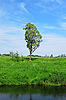 Single tree under blue sky | Stock Foto