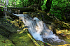 Cascade falls in forest | Stock Foto