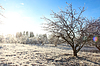 Winter landscape with hoarfrost crystal apple tree | Stock Foto