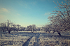 Road in winter forest landscape. Soft toning effect | Stock Foto