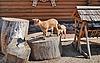 ID 3025033 | Goatlings | Foto stockowe wysokiej rozdzielczości | KLIPARTO