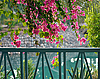 Photo 300 DPI: Hanging branches with pink flowers bougainvillea