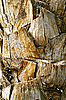 Texture of palm trunk | Stock Foto