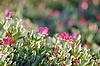 Kwiaty | Stock Foto