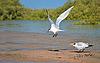 两个海鸥附近水   免版税照片