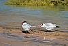 海鸥附近的水   免版税照片