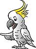 Vector clipart: Sulphur Crested Cockatoo