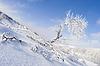 Winter landscape with snowy tree | Stock Foto