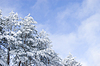 Winter landscape with snowy trees | Stock Foto