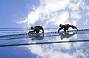 Two workers washing windows | Stock Foto
