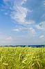 Beautiful rural landscape with wheat field | 免版税照片