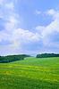 Summer landscape with blue sky | 免版税照片