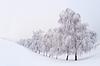 Winter landscape   Stock Foto